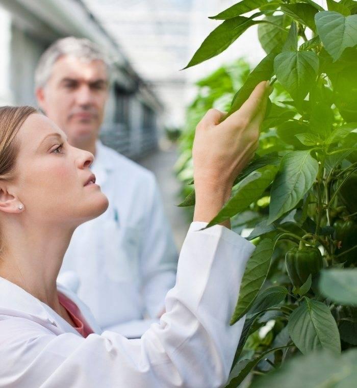 recherche scientifique plantes traitement naturel mycose vaginale